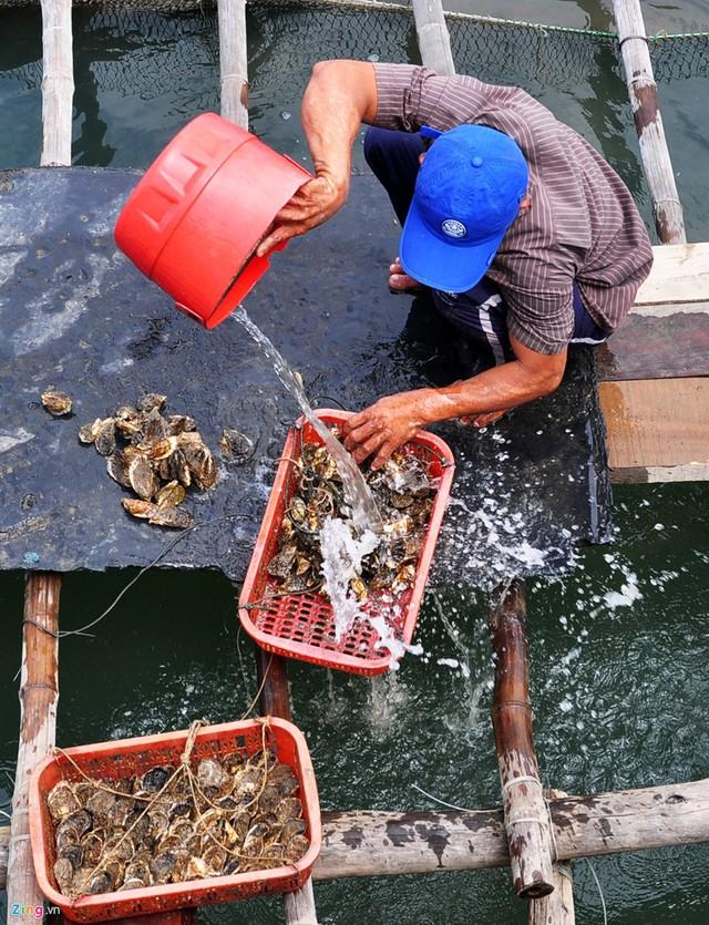 Nghề nuôi tôm hùm, cá bớp, hàu sữa ở vùng biển Sa Huỳnh - Ảnh 2.