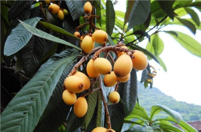 Nhưng chúng chỉ là loại quả bình thường mọc ven đường (Ảnh minh họa)
