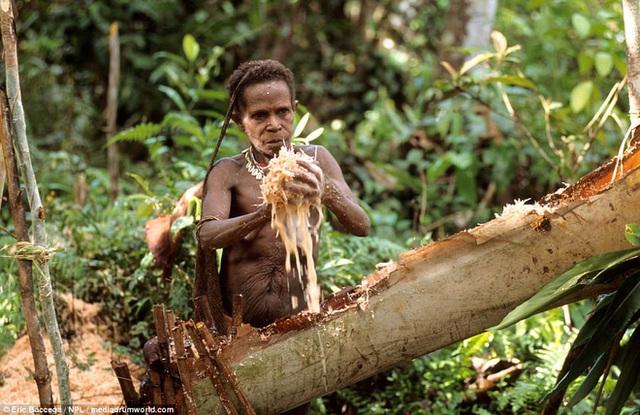Bộ lạc sống trên cây cao tới 50m và tách biệt với loài người ngay tại Đông Nam Á