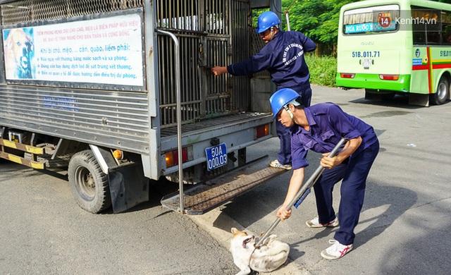 Chó cưng bị Đội săn bắt tóm, cụ bà hớt hải: Nó đi chợ với tôi, đang nằm trên vỉa hè chờ tôi về cùng thì bị bắt - Ảnh 1.