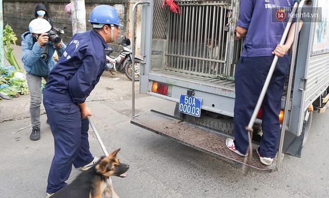 Chó cưng bị Đội săn bắt tóm, cụ bà hớt hải: Nó đi chợ với tôi, đang nằm trên vỉa hè chờ tôi về cùng thì bị bắt - Ảnh 2.
