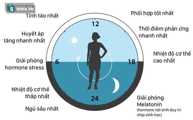 Đồng hồ sinh học của cơ thể người