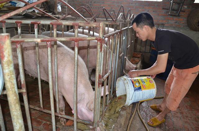 Chủ tịch Hội Chăn nuôi Việt Nam gửi tâm thư cho lãnh đạo Quốc hội, Nhà nước - Ảnh 2.