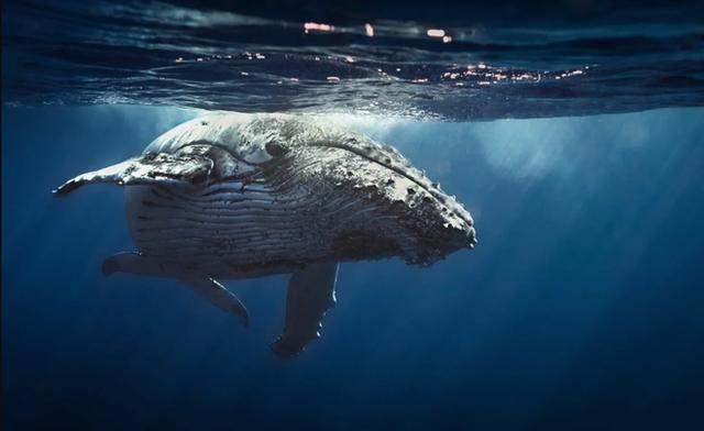 Những con cá voi xanh của thế giới Bitcoin, chỉ trở mình thôi là chao đảo cả thị trường - Ảnh 1.