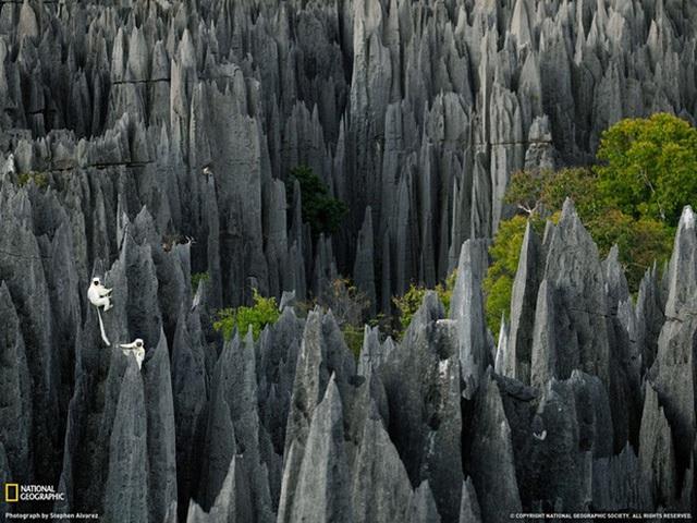 Rừng đá Tsingy de Bemaraha ở Madagascar mang một vẻ đẹp ma mị và gai góc, thế nhưng ít ai có thể chối từ được vẻ đẹp ấy.