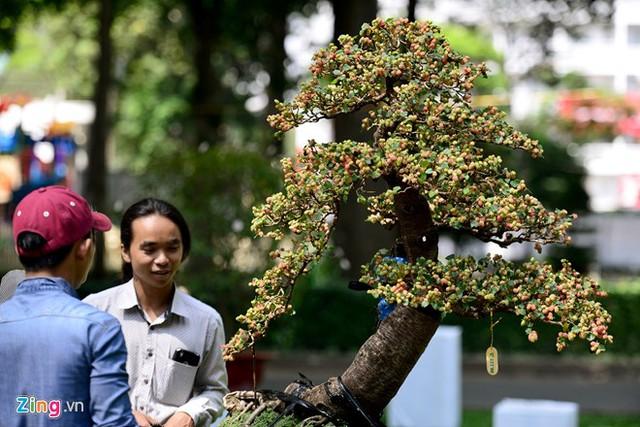 Cây dâu có hàng trăm quả chín mọng.
