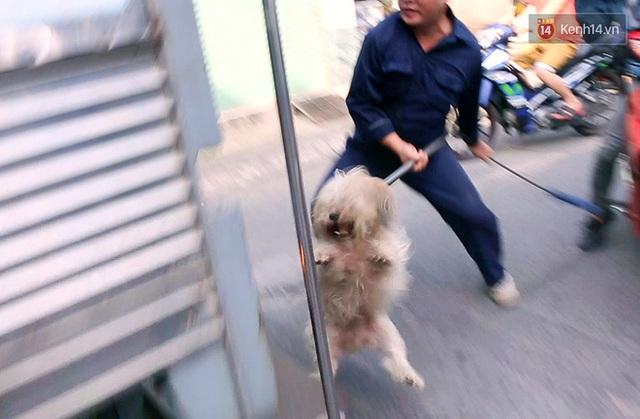 Chó cưng bị Đội săn bắt tóm, cụ bà hớt hải: Nó đi chợ với tôi, đang nằm trên vỉa hè chờ tôi về cùng thì bị bắt - Ảnh 12.