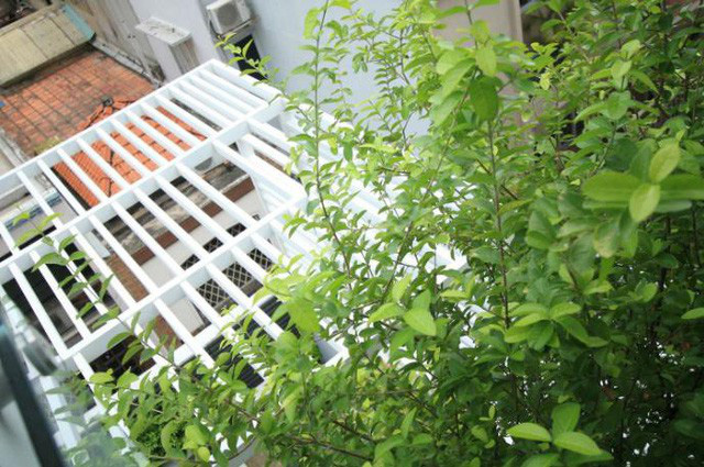 Cây xanh cũng được chủ nhà chú trọng trồng ở những khoảng trống đan xen phía mặt tiền.
