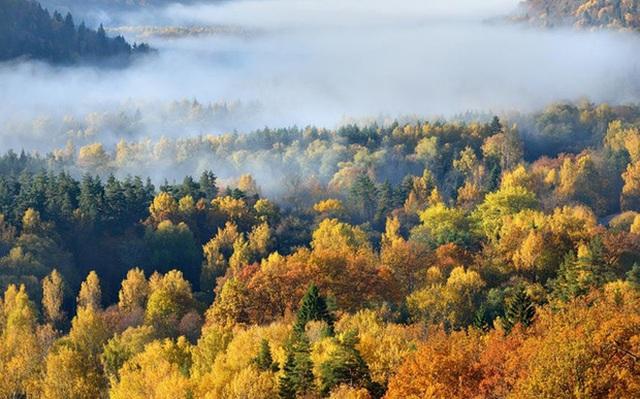 15. Québec, Canada: Canada thậm chí còn in hình lá phong lên quốc kỳ, đủ để thấy loài cây này nổi tiếng ở đây đến mức nào. Địa điểm tuyệt nhất để ngắm thu sang là dãy núi Laurentian vào cuối tháng 9. Và khi đã no mắt, bạn có thể đến khu nghỉ dưỡng trượt tuyết ở Mont-Tremblant để tham gia lễ hội Bản giao hưởng sắc màu.