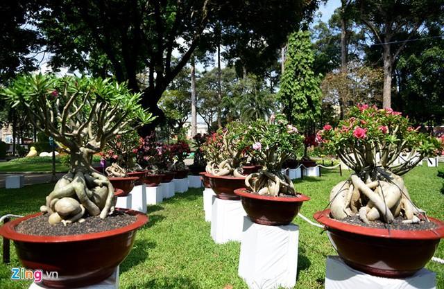 Ngoài ra, hội hoa xuân tại Công viên Tao Đàn còn có nhiều chậu hoa sứ, tùng, được nhập từ Nhật Bản, hồng từ Sa Đéc, cúc từ Đà Lạt...