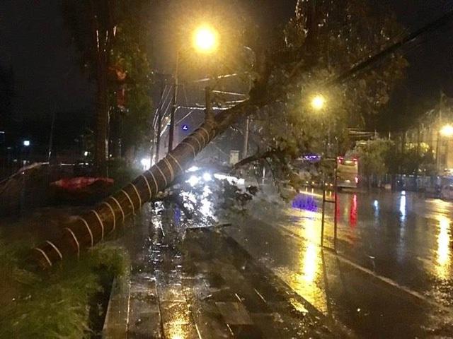 Cây đổ trước bến xe TP Vinh