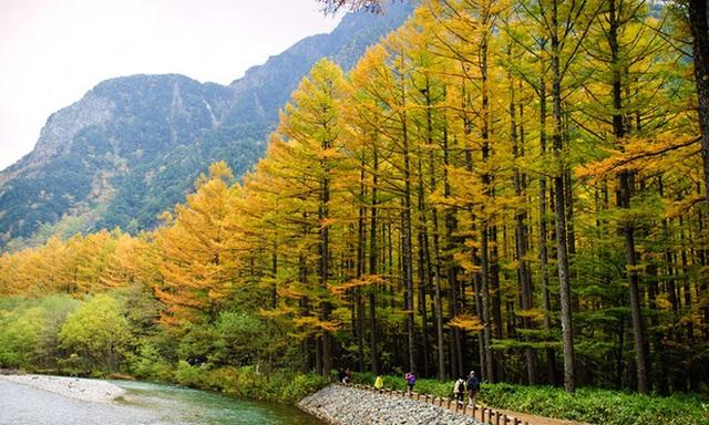 17. Công viên quốc gia Kamikochi, Honshu: Ở trung tâm Honshu, cách Nagoya 3 giờ lái xe về phía Đông Bắc, là một trong những địa điểm hấp dẫn nhất ở dãy Alps của Nhật Bản. Vào mùa thu, các sườn núi được bao phủ bởi những rừng sồi sẫm màu cam rực rỡ, khiến ai cũng phải xiêu lòng.