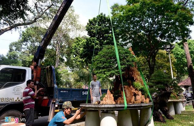 Trong ngày 24 tháng Chạp, nhiều loài cây cảnh, hoa được vận chuyển tới Công viên Tao Đàn để chuẩn bị phục vụ khách tham quan từ ngày mai, 25 tháng Chạp.