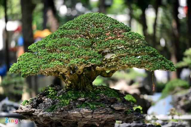 Trong những ngày qua, hàng trăm tác phẩm bonsai của nghệ nhân ở TP.HCM, các tỉnh lân cận và nước ngoài được vận chuyển tới trưng bày. Trong ảnh là tác phẩm Vạn lộc kỳ sơn do nghệ nhân Đỗ Xuân Phúc, quận 12, mang tới dự thi.
