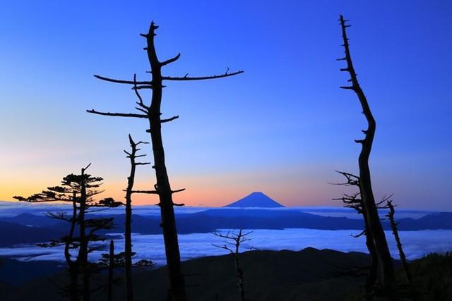 Giữa hai cây. Bức ảnh gây ấn tượng với khung cảnh trên đỉnh núi Phú Sĩ giữa 2 cây khô. (Nguồn: NatGeo)
