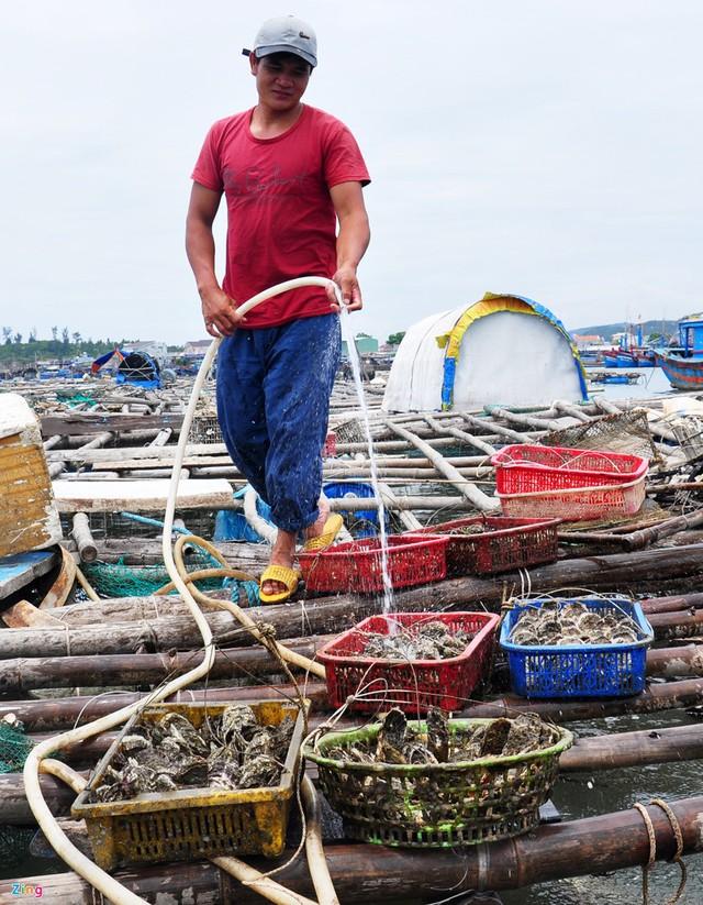Nghề nuôi tôm hùm, cá bớp, hàu sữa ở vùng biển Sa Huỳnh - Ảnh 3.