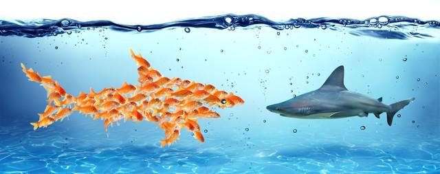 Con cá lớn trong cái ao nhỏ và lý do vì sao những bài học thành công ở Mỹ ít khi áp dụng được với người phương Đông - Ảnh 1.