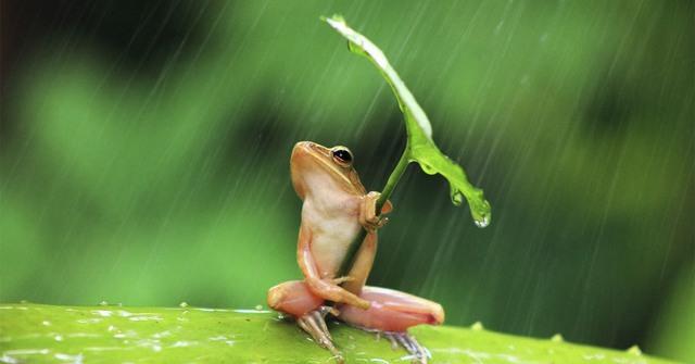 Câu chuyện con ếch và nồi nước sôi: Nếu cứ đứng yên một chỗ, không sớm thì muộn bạn sẽ bị đào thải - Ảnh 1.