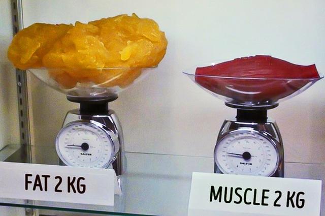 Hãy nhớ rằng, 1kg mỡ = 1kg cơ nhưng mỡ chiếm nhiều diện tích hơn so với cơ trong cơ thể của bạn.
