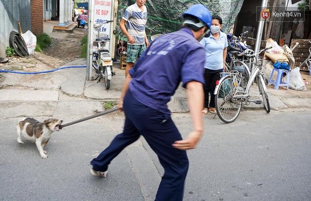 Chó cưng bị Đội săn bắt tóm, cụ bà hớt hải: Nó đi chợ với tôi, đang nằm trên vỉa hè chờ tôi về cùng thì bị bắt - Ảnh 3.