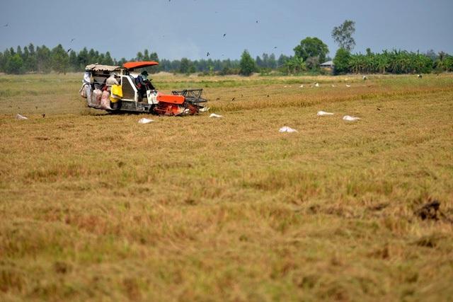 Doanh nhân hóa nông dân đồng bằng sông Cửu Long - Ảnh 3.