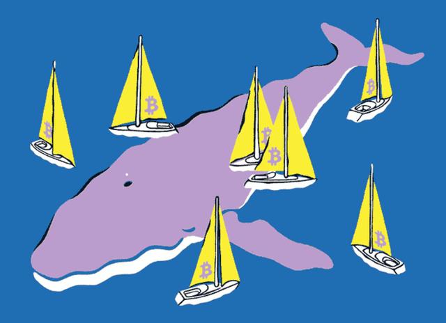 Những con cá voi xanh của thế giới Bitcoin, chỉ trở mình thôi là chao đảo cả thị trường - Ảnh 3.