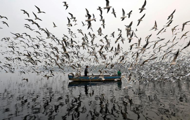 Những người đàn ông đang cho chim mòng biển ăn dọc theo sông Yamuna vào một buổi sáng sớm đẫm sương tại New Delhi, Ấn Độ, ngày 17 tháng 11.