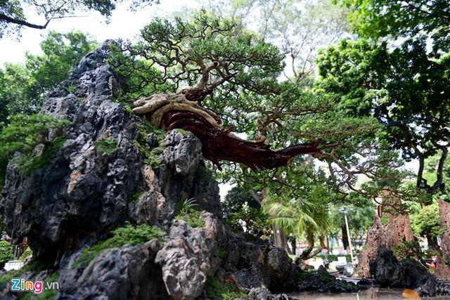 Tác phẩm bonsai khá đồ sộ Hà Nhai vãn độ cũng của nghệ nhân Đỗ Xuân Phúc.
