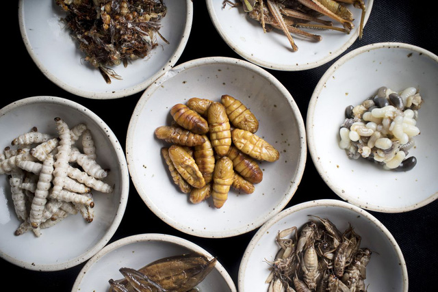 Đầu bếp Thái Lan biến côn trùng thành đồ ăn cao cấp - Ảnh 4.