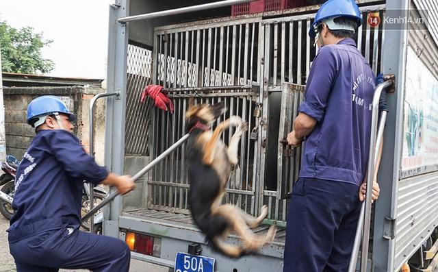Chó cưng bị Đội săn bắt tóm, cụ bà hớt hải: Nó đi chợ với tôi, đang nằm trên vỉa hè chờ tôi về cùng thì bị bắt - Ảnh 4.
