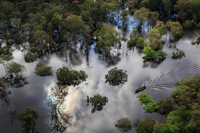 Công viên Quốc gia Anavilhanas nằm gần dòng sông Amazon vĩ đại đoạn chảy qua Brazil. Uống dòng nước từ Amazon nên nước ở đây trong vắt và mát rượi, phản chiếu cả một bầu trời đầy nắng.