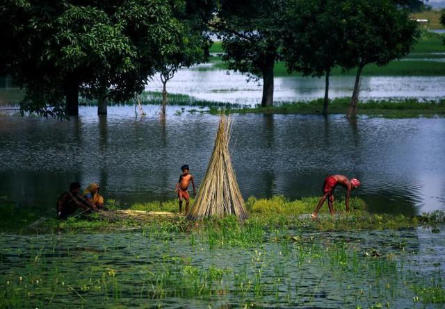 Các nạn nhân của trận lũ lụt đang cố gắng dựng một ngôi nhà bằng cây đay tại vùng bị ảnh hưởng lũ ở quận Saptari, Nepal vào ngày 14 tháng 8.