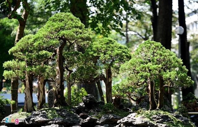 Tác phẩm Tiếng vọng Côn Sơn của nghệ nhân Võ Đại Phong, quận Thủ Đức, như một khu rừng thu nhỏ.