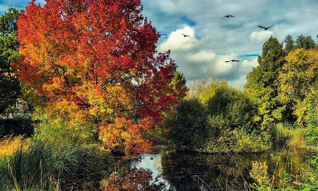 5. Herne Hill, London: Hãy nhân một cuối tuần, hãy dậy sớm đi dạo quanh Công viên Brockwell để ngắm cảnh tuyệt vời của đường chân trời London và màu sắc đẹp trời tựa của Herne Hill. Khung cảnh ở đây thực sự đẹp như thôi miên.