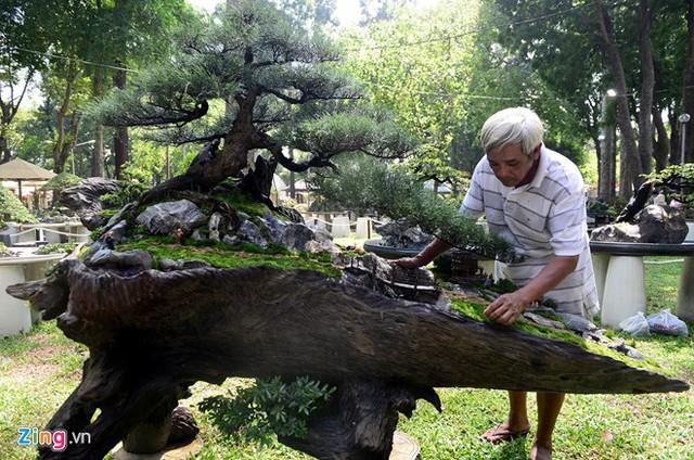 Ông Nguyễn Văn Hiền, huyện Hóc Môn, cho biết tác phẩm Vịnh đèo Ngang của ông ngoài cây phi lao nuôi hơn 10 năm qua, điều đặc biệt là bệ gỗ sao độc đáo. Bệ cây này được nghệ nhân lấy cảm hứng từ đèo Ngang nằm giữa tỉnh Hà Tĩnh và Quảng Bình.