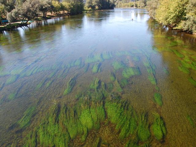 Vi khuẩn màu xanh trong nước.