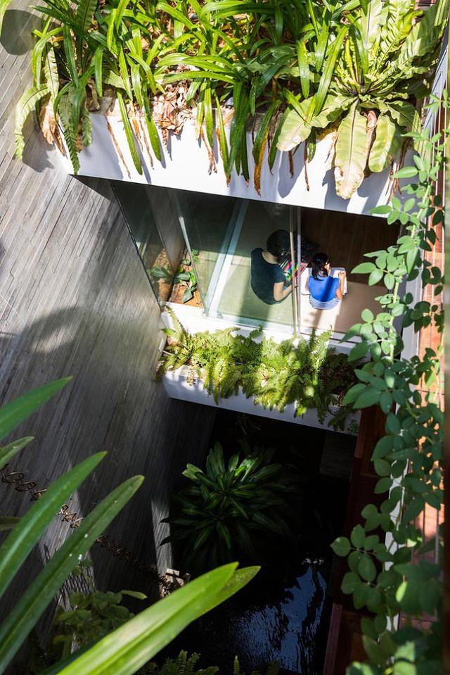 Không chỉ trên sân thượng, giữa nhà cũng được bố trí hồ nước nhỏ và dàn cây leo