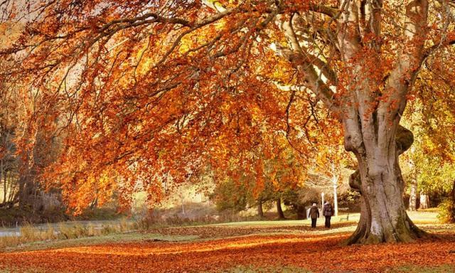 7. Peebles, Scotland: Thị trấn Peebles huyền ảo, cách Edinburgh một giờ lái xe. Quang cảnh ở đây đẹp quanh năm nhưng đến đầu tháng 10, những cây cối bao quanh thị trấn đã bùng nổ thành một bảng màu sắc tuyệt đẹp.
