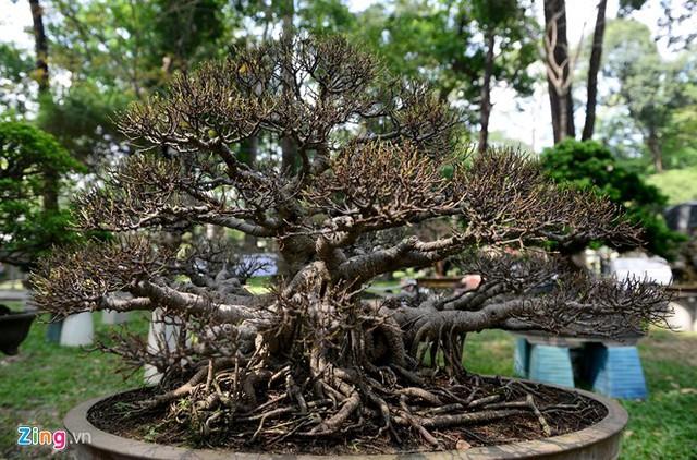 Nhiều loài bonsai lạ, đẹp mắt tạo nên ấn tượng và mới lạ hơn cho hội hoa xuân năm nay.