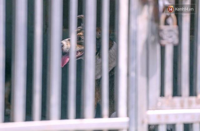 Chó cưng bị Đội săn bắt tóm, cụ bà hớt hải: Nó đi chợ với tôi, đang nằm trên vỉa hè chờ tôi về cùng thì bị bắt - Ảnh 8.