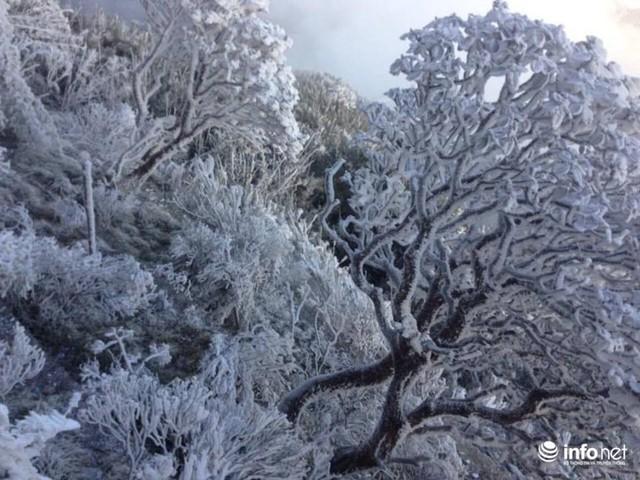 Nhiệt độ xuống âm 7 độ C, đỉnh Fansipan phủ trắng băng tuyết - Ảnh 8.