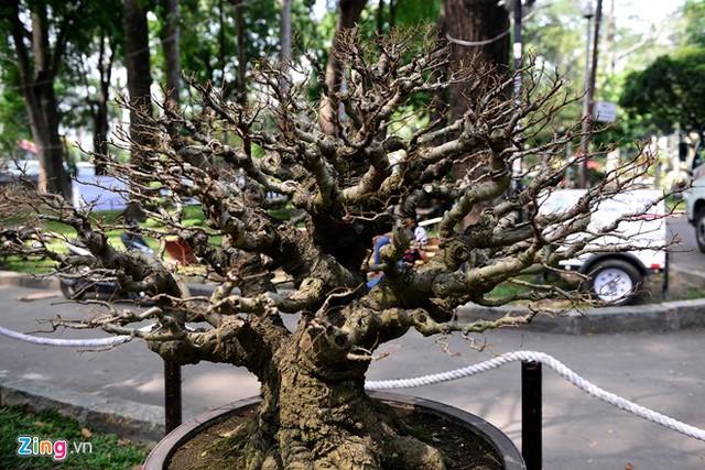 Một trong những cây cảnh độc đáo được tỉa lá xanh, chuẩn bị ra lá mầm vào dịp Tết.