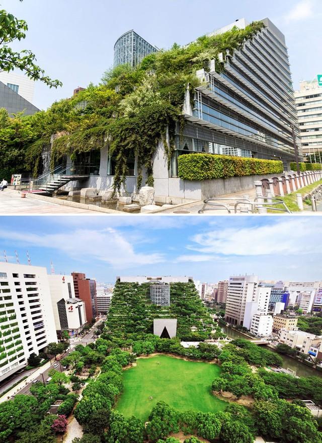 Tòa nhà Acros tại Fukuoka này như cả một khu rừng xanh thẳm nằm giữa đô thị tấp nập và đầy khói bụi.