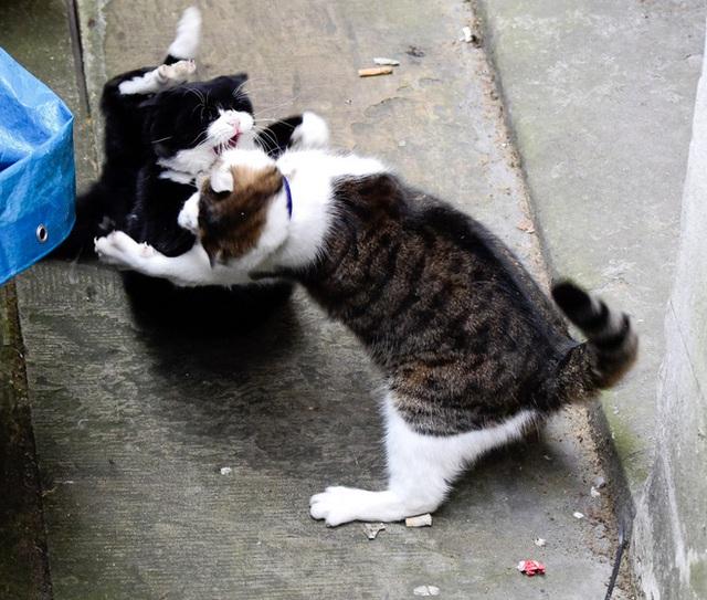 Larry và vụ ẩu đả kinh điển với Palmerston năm 2016.