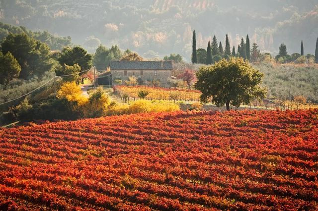 9. Umbria, Ý: Mùa thu ở đây đến khá muộn. Đầu tháng 11, sau đợt thu hoạch nho, là thời điểm thích hợp nhất để ngắm lá nho nhuộm đỏ Umbria.