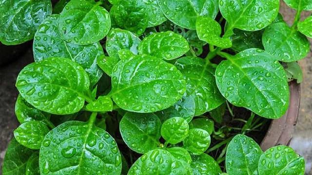 Có mặt thường xuyên trên mâm cơm gia đình, nhưng ít ai biết khả năng chữa bệnh kỳ diệu của loại rau này - Ảnh 2.