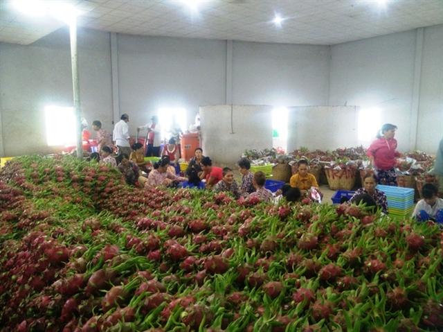 Từng là động lực của sản xuất thời kỳ bao cấp, đây sẽ tiếp tục là chìa khóa để phát triển kinh tế nông thôn trong thời đại mới - Ảnh 2.