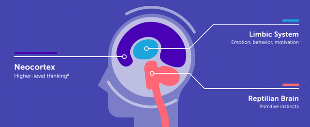 Cấu trúc não bộ con người (Nguồn: insights.newscred.com)