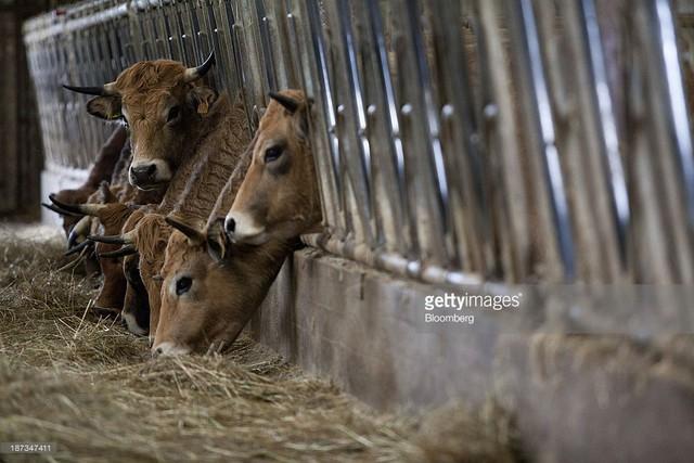 Nông nghiệp Pháp đi lên con đường cường quốc từ nền tảng manh mún như thế nào? - Ảnh 2.