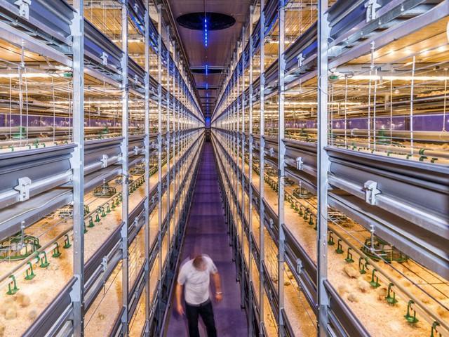 Hà Lan: Quốc gia nhỏ bé có thể nuôi cả thế giới - Ảnh 4.